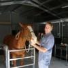 Our purpose-built equine hospital