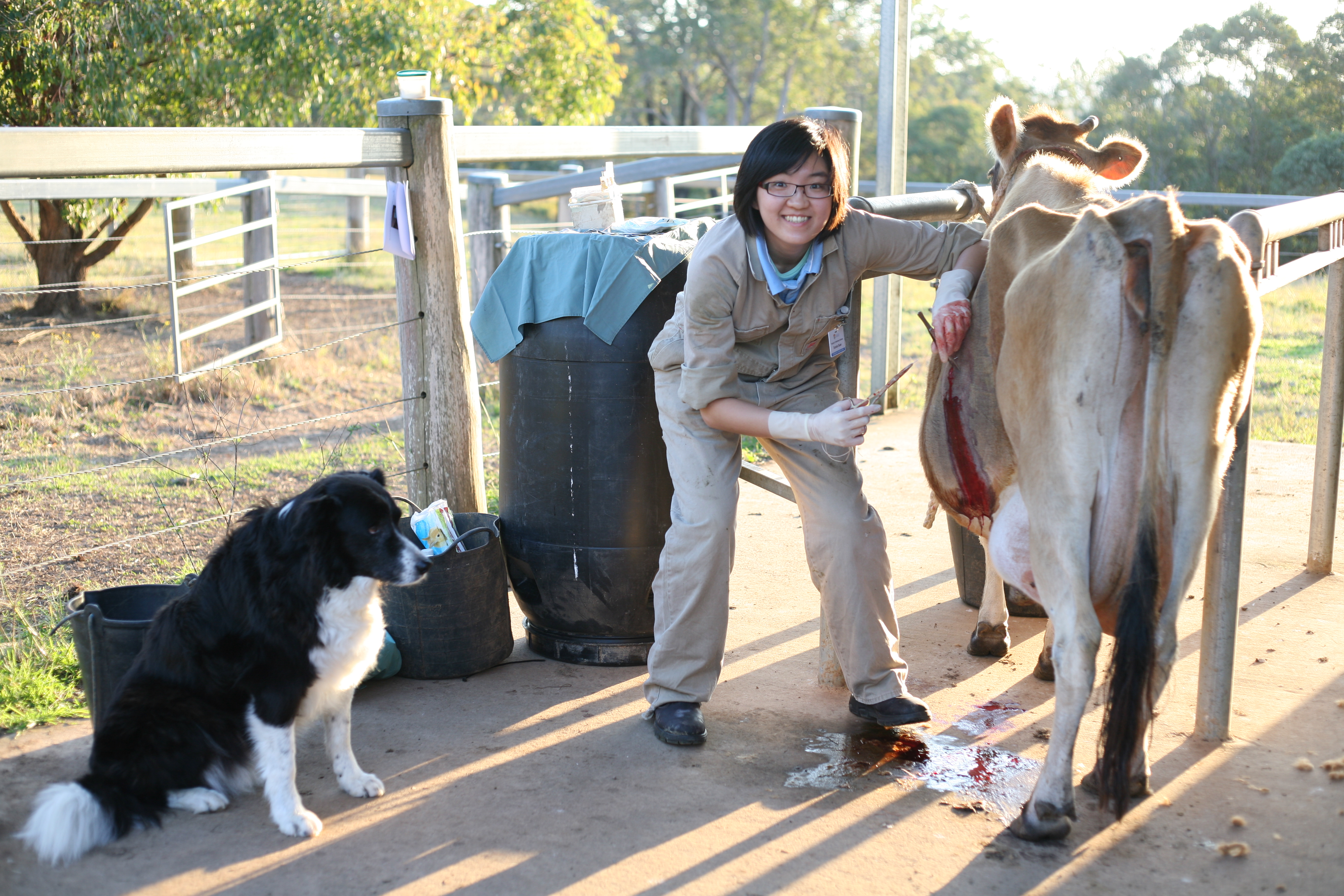 Final Year Veterinary Student Placements | Wingham and