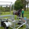Mobile Horse Crush