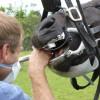 Horse Dental
